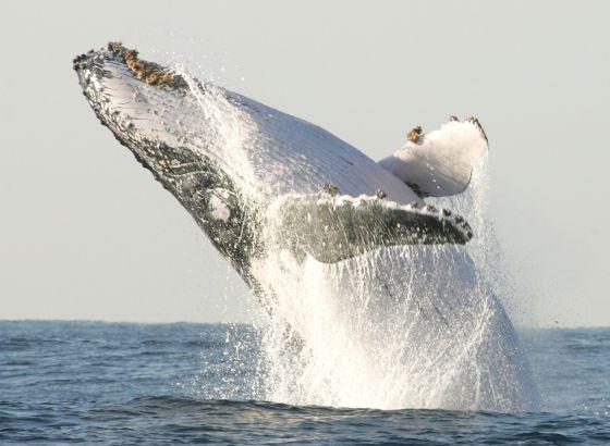 El Tribunal de la ONU frena la caza de ballenas con fines ...