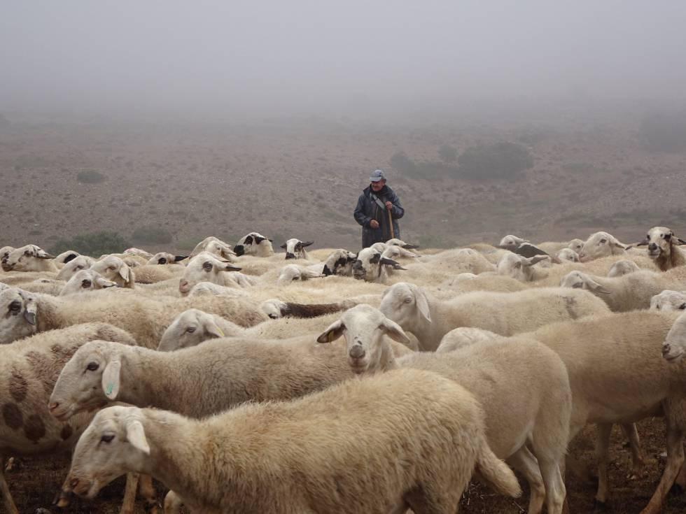 Castilla y León propone dejar a los ganaderos ahuyentar a tiros al lobo