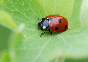 Las prácticas agrícolas abocan a los insectos a una desaparición masiva