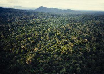 La política de Bolsonaro hace peligrar el millonario Fondo Amazonia de lucha contra la deforestación