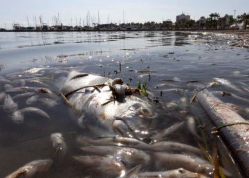 La asfixia del mar Menor