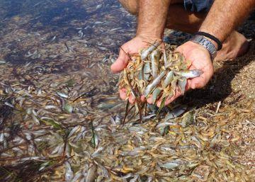Los agricultores investigados por verter residuos al Mar Menor niegan ante el juez haber dañado la laguna