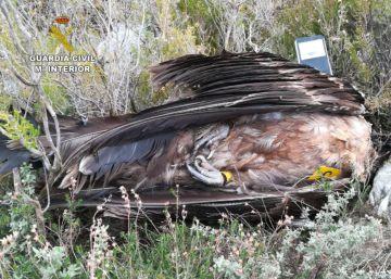 El veneno asesino de especies protegidas
