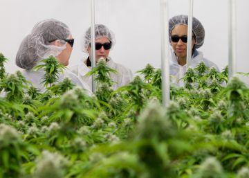 La industria del cannabis medicinal reclama al Gobierno su legalización