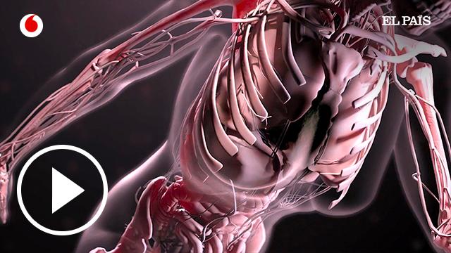 Un humano virtual programado célula a célula