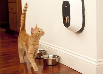 Alimentar a tu mascota desde el trabajo y otras ventajas de la tecnología
